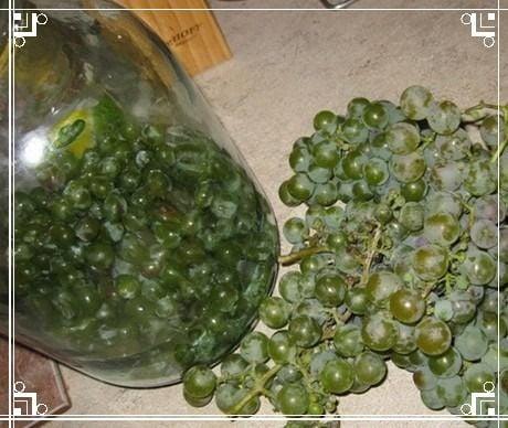 закладка винограда в бутыль